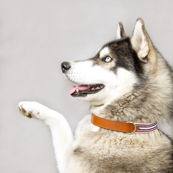 Collier pour chien Léonard - blanc