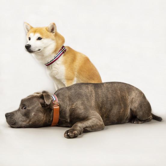 Collier pour chien Léonard - bleu