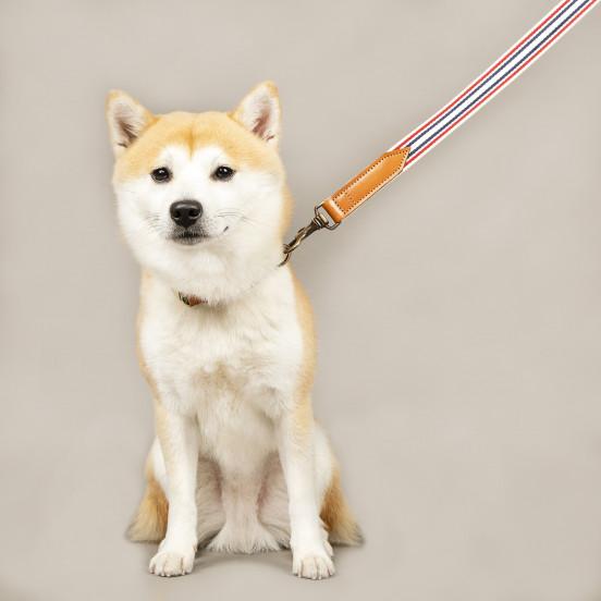 Laisse pour chien Léonard - blanc