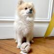 Corde Boule naturelle pour chien