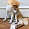 Corde Os naturelle pour chien