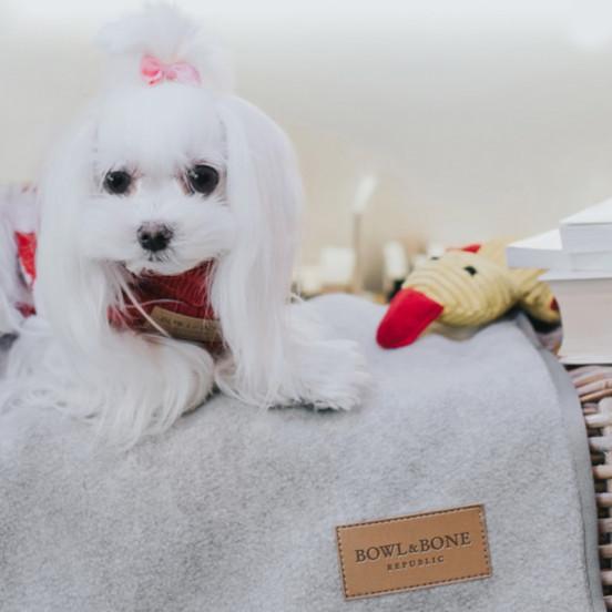 Plaid pour chien chaud et doux Zen - gris