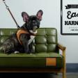 Laisse fine pour chien Easy - marron