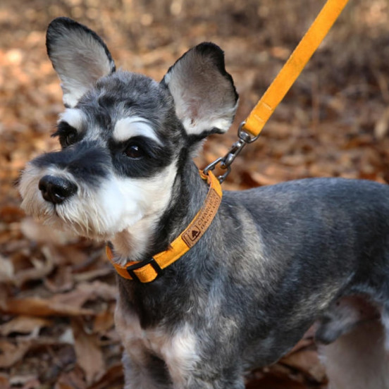 Laisse fine et ajustable pour chien Easy - jaune