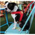 Harnais pour chien confortable et pratique Easy - rouge