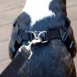 Harnais pour chien confortable - noir