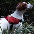Harnais pour grand chien Above - marron