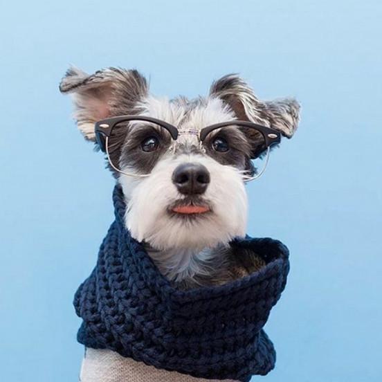 Echarpe Snood pour chien Infinity - bleu