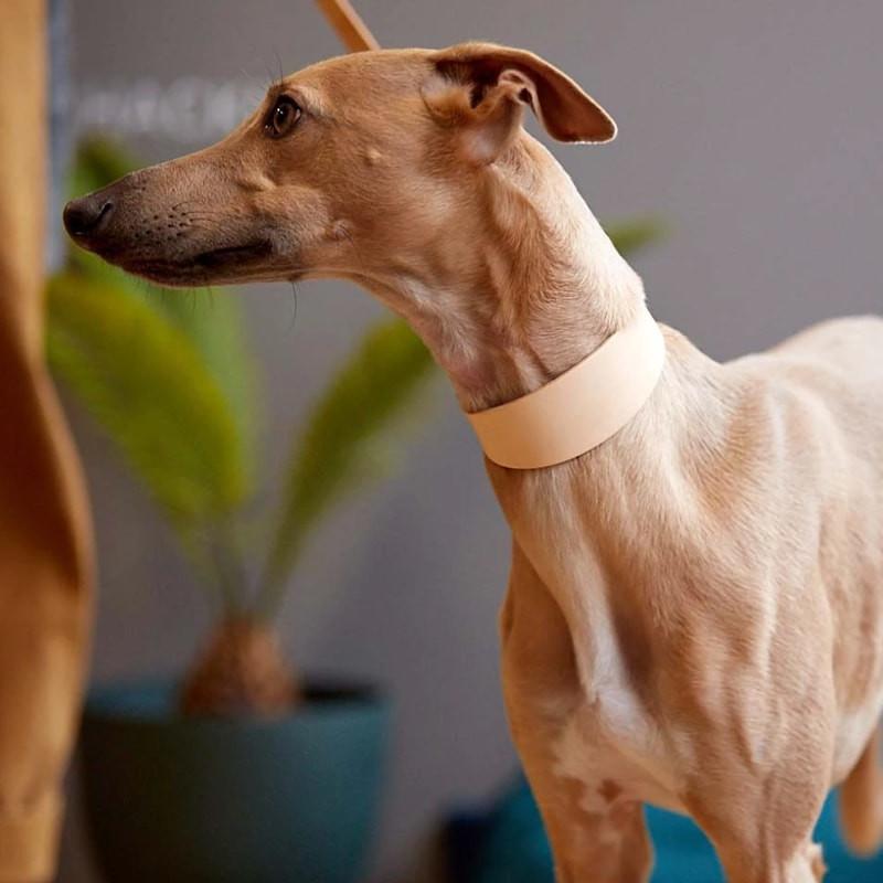 collier pour chien en cuir naturel