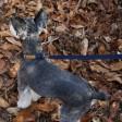 Collier pour chien fin et léger - bleu marine