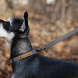 Collier pour chien fin et léger - gris