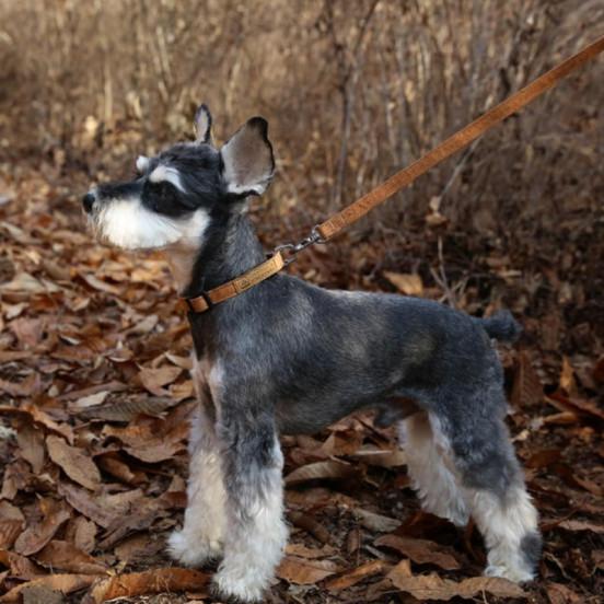 Collier pour chien fin et léger - marron