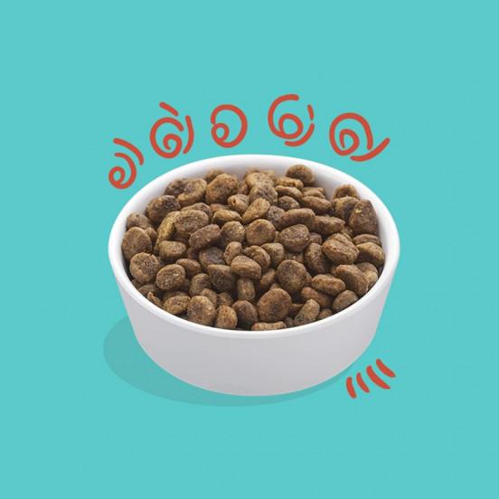 Croquettes pour CHAT Sans Céréale au Poulet Frais