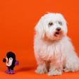 Jouet pour chien perroquet coton bio