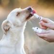 Gant brosse à dents pour chien naturel et efficace