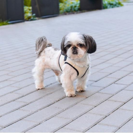 Harnais pour petit chien Soho - gris