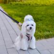 Harnais pour petit chien Soho - rose
