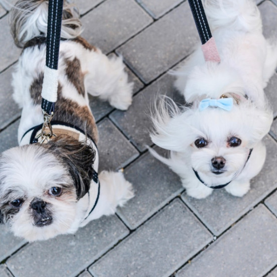 Laisse fine pour chien Soho - anthracite