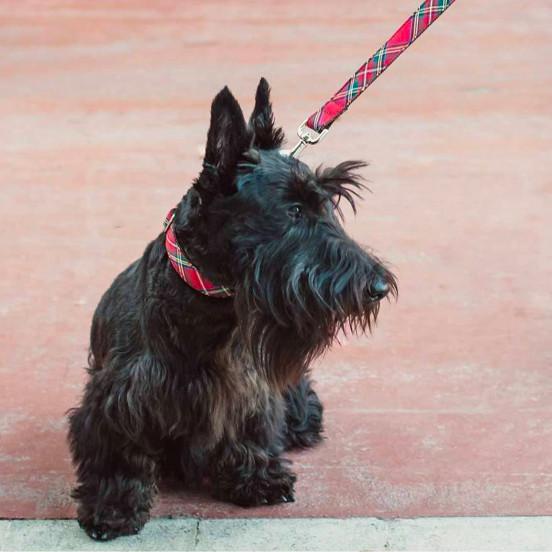 Laisse pour chien Faite Main en Tartan Ecossais Tremp - carreaux rouges