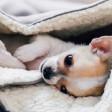 Plaid Cocon pour chien Dreamy - gris clair