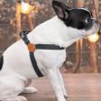 Harnais pour chien Coton et Cuir Facile à Attacher - Dessin Gotham - gris anthracite