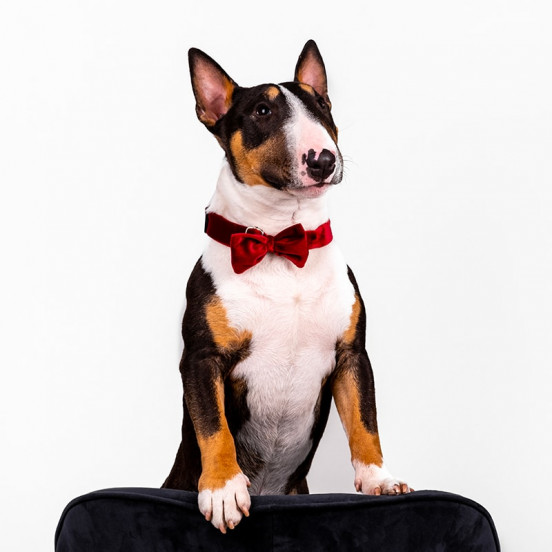 Collier nœud papillon pour chien rouge velours